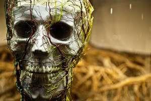 A skull wrapped in false nerve fibers.