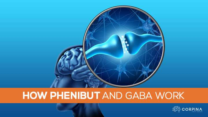 How Phenibut Affects GABA Signaling in the Brain