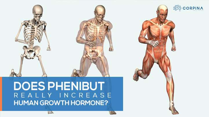 Does Phenibut Really Increase Human Growth Hormone Corpina