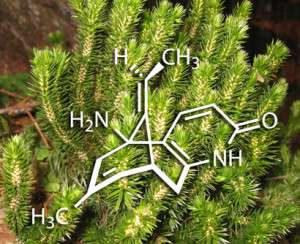 huperzine a plant and chemical structure