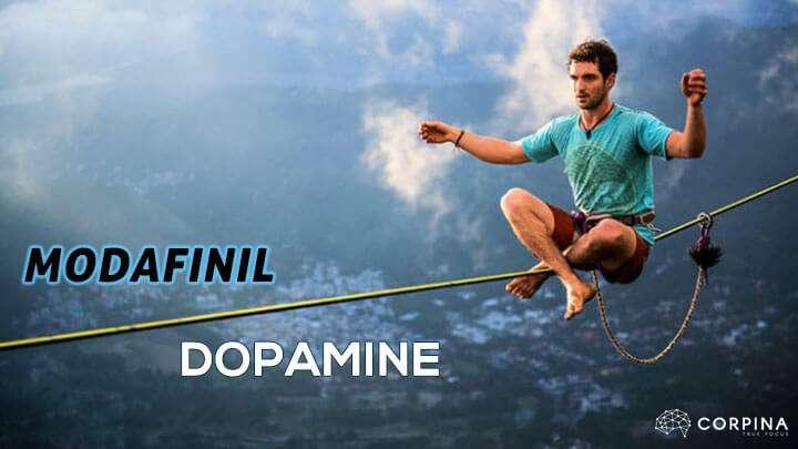modafinil dopamine