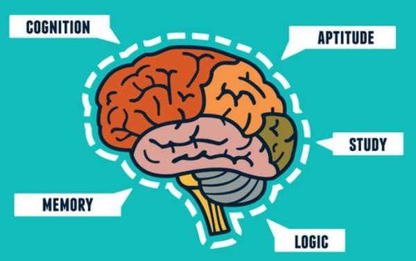 image of a brain asking what is the best nootropic stack in 2017, for focus memory attention and learning
