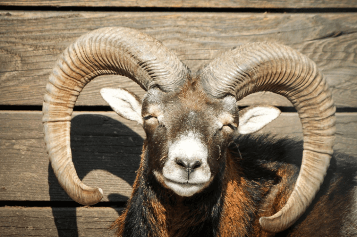 Horny Goat Weed Efficacy: What The Science Says in 2018